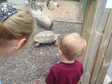 """Bye tortoise!"""